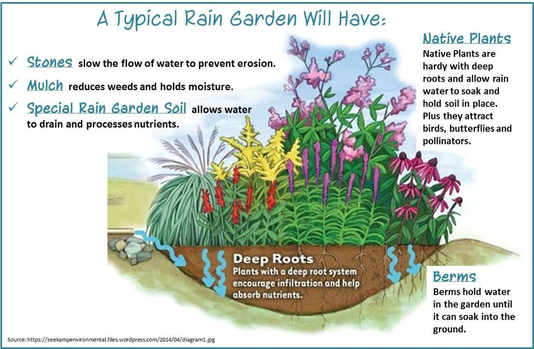 A poster with a drawing of a rain garden and a list of their typical features: stones, mulch, engineered soil, native plants, deep roots, and a berm.